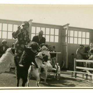 4 UNIQUE VINTAGE REAL PHOTO POSTCARDS OF PERFORMING DOGS, BLACKPOOL BEACH?