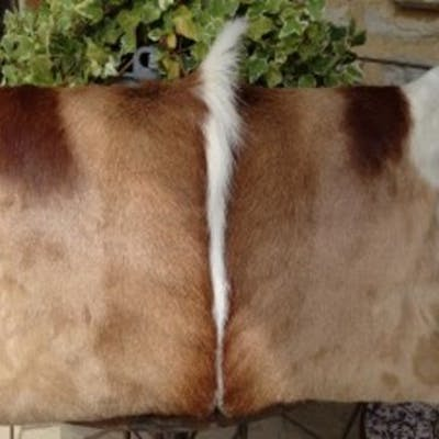 Springbok Cushions A Beautiful Set Of 4 x Genuine African Handcrafted