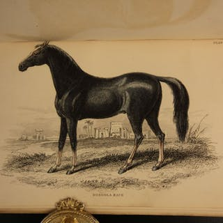 1850 Jardine Book of HORSES 28 Hand-colored Illustrated Donkey Equestrian