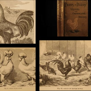 1886 Profits in Poultry Chicken Breeding Turkey Ducks FARMING Agriculture