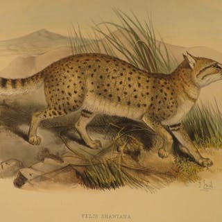 1879 1ed Stoliczka Second Yarkand Mission INDIA Blanford Illustrated Animals