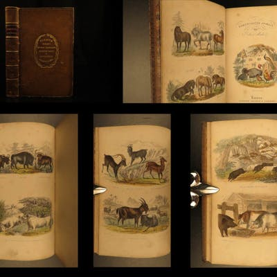 1870 1ed Domesticated Animals Mudie FARMING Agriculture Horses Color