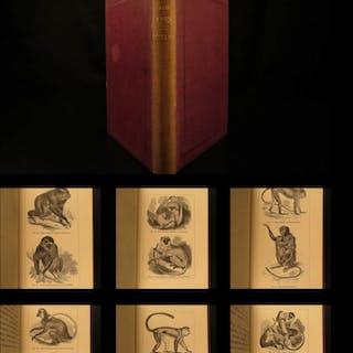 1874 1ed Mivart Man & Apes DARWIN EVOLUTION Zoology Illustrated Gorilla