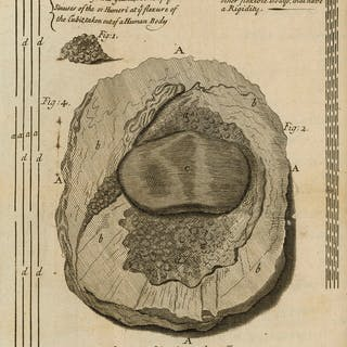 Osteology.- Havers (Clopton) Osteologia Nova, or Some New Observations