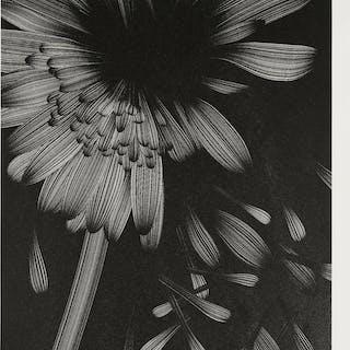 Kai & Sunny (b.1975 & b.1977) Broken Flower - Love Me, Love Me Not