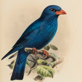 Birds.- Dresser (Henry Eeles) A Monograph of the Coraciidae, or Family