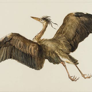 Birds.- Ward (After James, 1769-1859) Heron flying, pen and brown