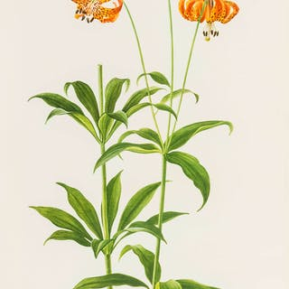 Botany.- [Redouté (Pierre-Joseph)] Works Published or Illustrated
