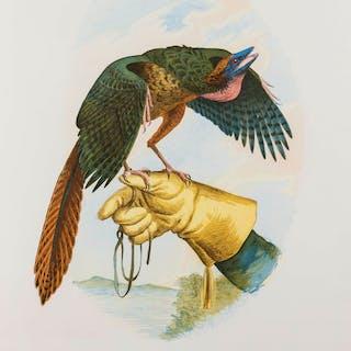 Walton Ford (b. 1960) New Tricks for Ancient Wings, Walton Ford (b.