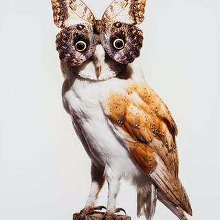 Fouts (Nancy) Owl with Butterfly, C-print in colours, 2012. Fouts
