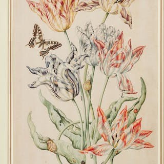DUTCH SCHOOL, 18TH CENTURY | An arrangement of six tulips, with a