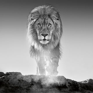 DAVID YARROW | THE OLD TESTAMENT, DINOKENG, SOUTH AFRICA