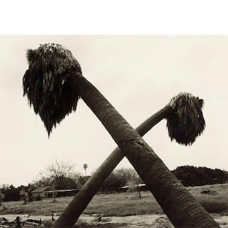 ROBERT ADAMS | 'DEAD PALMS, PARTIALLY UPROOTED, ONTARIO, CALIFORNIA'