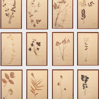 European School: Botanical Specimens