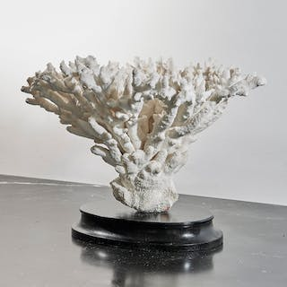 White coral on black lacquered wood base | dicksonrendall