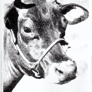 WARHOL Andy - COW, A retrospective of MoMA