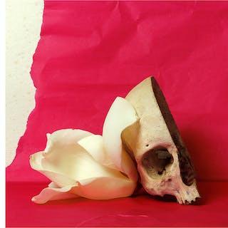 Magnolia y calavera (Tempus fugit) - Xurxo Gómez-Chao