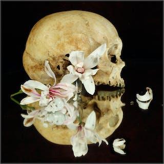Still life (Tempus fugit) - Xurxo Gómez-Chao