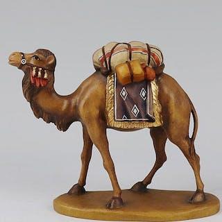 Lepi - Kamel