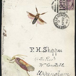 1890 hand painted water colour (two insects) cover front, 1d lilac