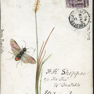 1890 hand painted water colour (plant & insect) cover front, 1d lilac