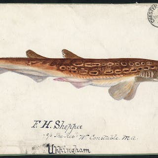 1891 hand painted watercolour (Black Mouthed Dog Fish) cover front