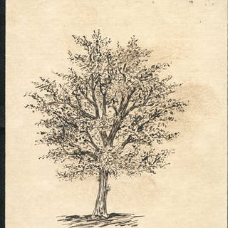 1903 ½d postcard from London to Shippen, pen & ink illustration