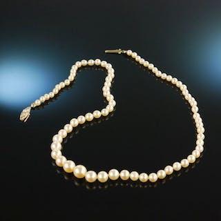 München um 1935! Frühe Akoja Zucht Perlen Kette Platin Gold 585