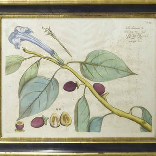 A SET OF FOUR STUDIES OF FOLIAGE AND TROPICAL FRUITS