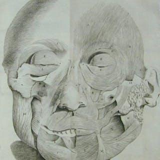 Observationes anatomicae - Santorini, Giovanni Domenico.