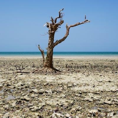 Pierre LESAGE - Still alive, Zanzibar, Photographie