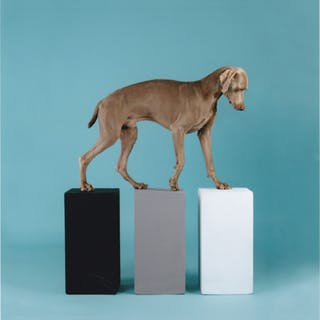 William Wegman, dog with three cubes 2016 Epreuve signée à  l'encre