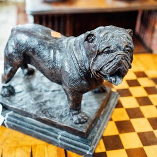 Bronze model of a bull dog mounted on a marble base. { 23cm H X 26cm