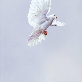 """MEISSEN Wandbild """"Weiße Taube"""""""